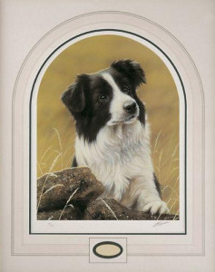 classic breed border collie - mounted