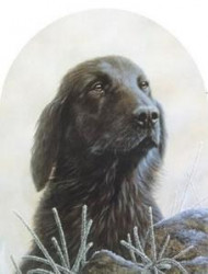 Classic Breed Flat Coated Retriever