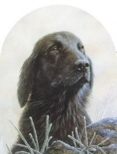 Classic Breed Flat Coated Retriever - Mounted