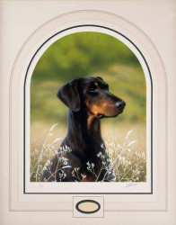 Classic Breed Dobermann