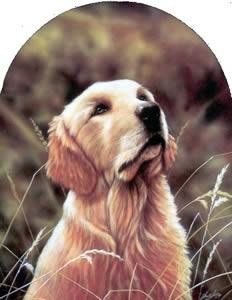 Classic Breed Golden Retriever - Mounted