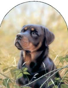 Classic Breed Rottweiller - Mounted