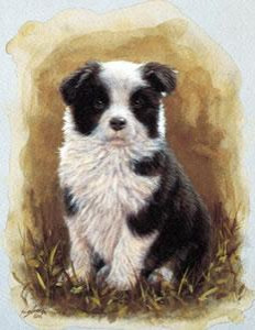 Border Collie Pup Study - Mounted