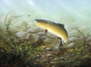 country sports brown trout - mounted
