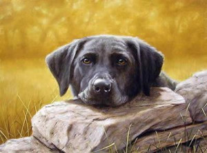 Black Lab Lazing - Print only
