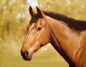 horse portrait - print only