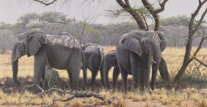 Taking Shade - Elephants - Print only