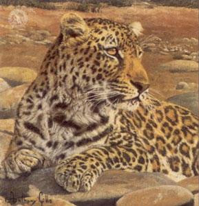 five faces of india - leopard - print only