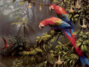 Jewels Of The Forest  - Parrots - Mounted