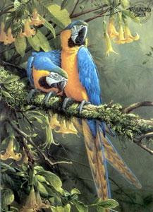 blue & gold macaw - parrots - mounted