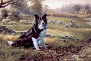 Ready For Work - Border Collie - Mounted