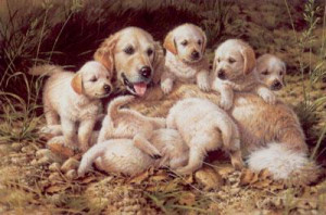 bottoms up - golden retriever & puppies - mounted