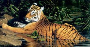 Reflections Of India - Tiger - On Canvas - Canvas With Slip