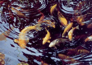 On Golden Pond (On Canvas) - Koi Carp - Print only