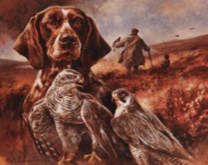 german shorthaired pointer & falcons - print