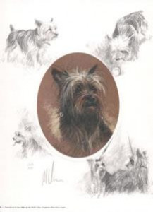 oval yorkshire terrier - print