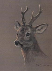 head of a roe deer - print