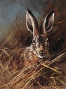 head of a hare - print