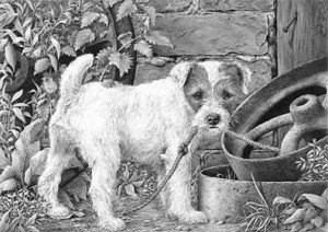 what? (parson russell terrier) - print