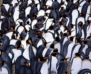 penguins in the crowd - mounted