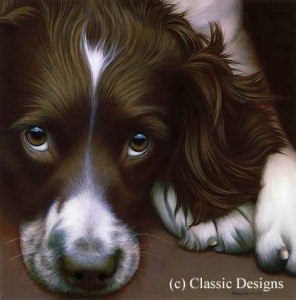 larger than life - springer spaniel ii (bc) - box canvas