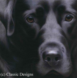 Larger Than Life - Black Lab II (Bc)