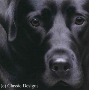 larger than life - black lab ii (bc) - box canvas