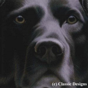 larger than life - black labrador - print