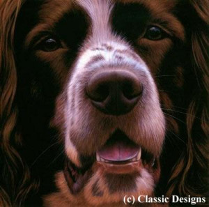 larger than life - springer spaniel - print