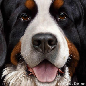 larger than life - bernese - framed