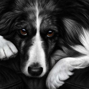 dog tired series - border collie - print