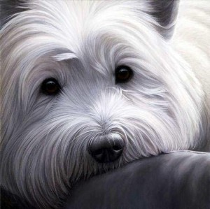 dog tired west highland terrier - print