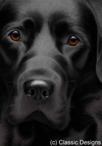 larger than life - black labrador iii - print
