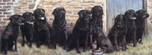 the new recruit - black labradors - mounted