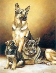 generations - german shepherd dog - print