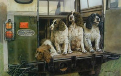 Four By Four - Springer Spaniels