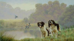 Watersports - Springer Spaniels