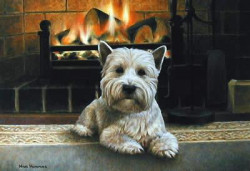 Westie Infront Of Fireplace