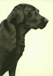 just dogs - black labrador - framed