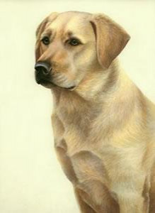 just dogs - yellow labrador - framed