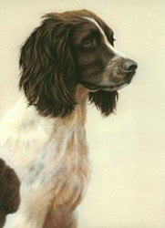 Just Dogs - Liver & White English Springer Spaniel