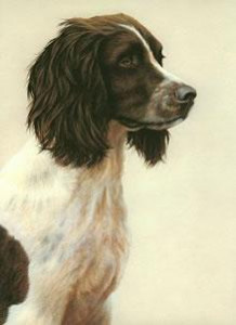 just dogs - liver & white english springer spaniel - framed