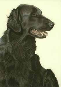 just dogs - black flat coated retriever - framed