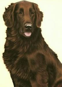 just dogs - liver flat coated retriever - framed
