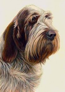 just dogs - brown roan italian spinone - framed