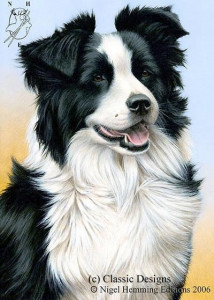 just dogs - border collie - print