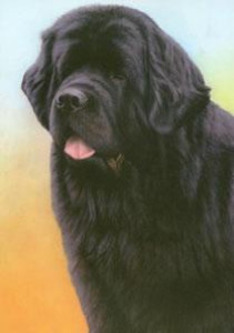 just dogs - black newfoundland - print