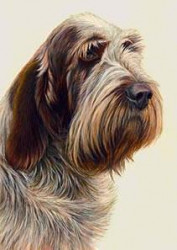 Just Dogs - Brown Roan Italian Spinone