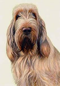 just dogs - white & orange italian spinone - mounted