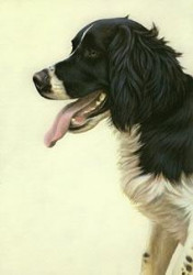 Just Dogs - Black & White English Springer Spaniel